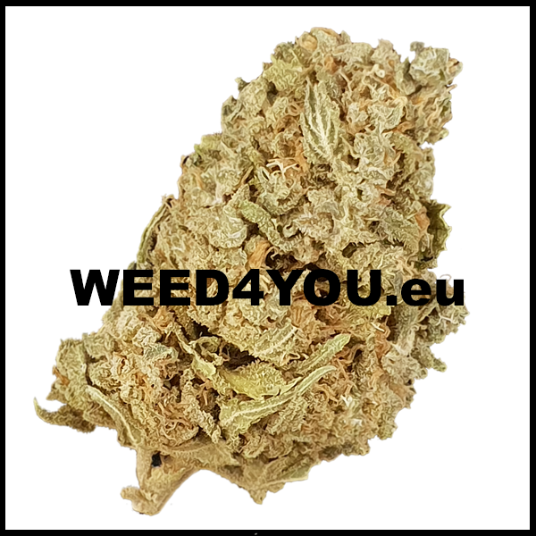 Colombian Gold Weed