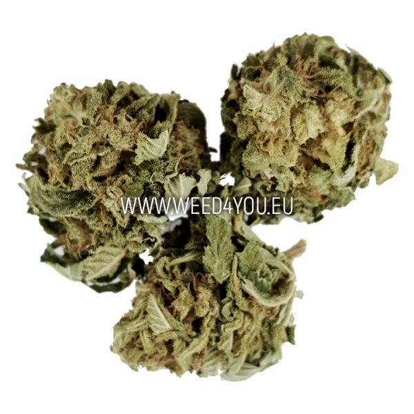 cannabis graz